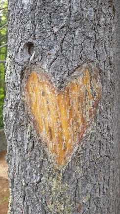 Heart on the Trail